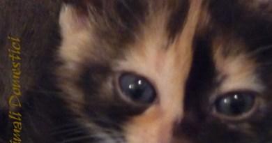 cucciolo gatto