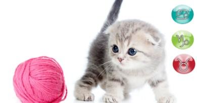 oroscopo del gatto