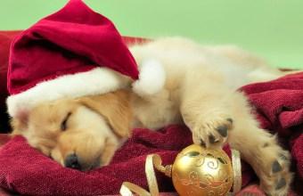 Natale, Regalo Animali Domestici