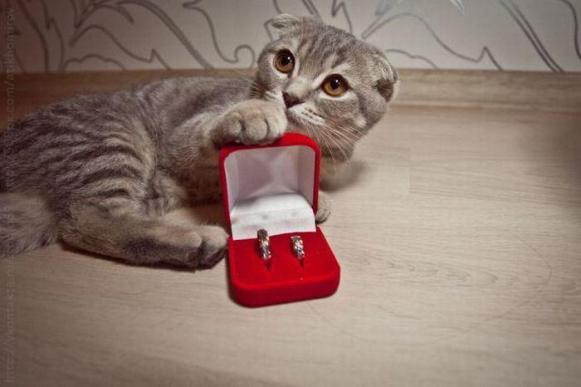 Come sposare il proprio animale domestico