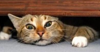 gatti stressati