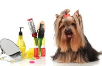 Toelettatura per cani e gatti vs parrucchiere