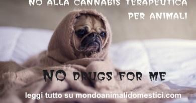 Cannabis terapeutica per animali