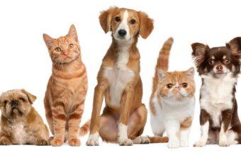 Animali domestici quanto costano