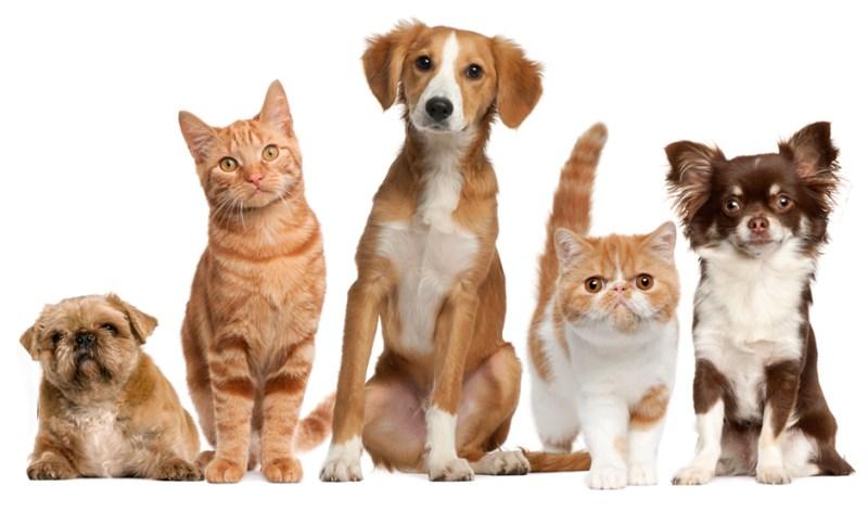 antiparassitari Animali Domestici quanto ci costano