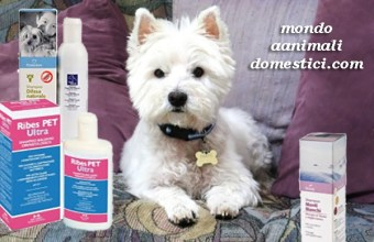 I Migliori Shampoo per cani perchè un cane pulito è un cane felice