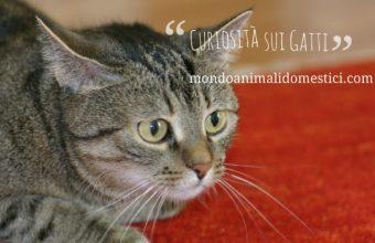 Curiosità sui gatti, animali dalla lunga storia