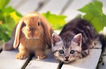 Coniglietti, tra gli animali domestici più amati