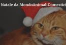 Babbo Natale per Animali Domestici: gatti e gattini