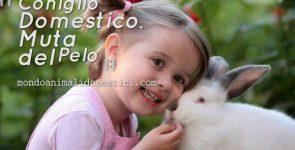 Autunno, la Muta del Coniglio Domestico: come affrontarla
