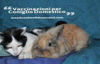Vaccinazioni per il Coniglio Domestico