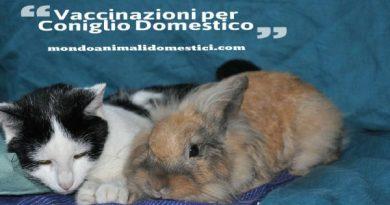 vaccinazioni coniglio domestico