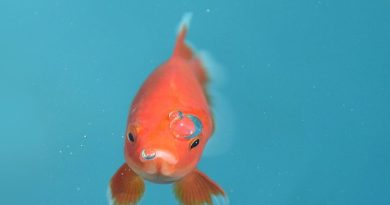 come far vivere a lungo il pesce rosso