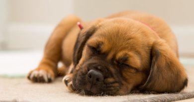 Cuccioli di cane, come farli socializzare e crescere equilibrati