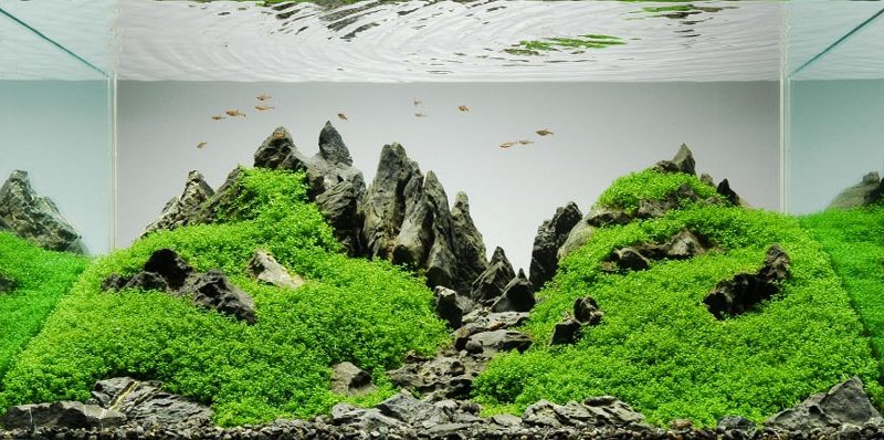 aquascaping cos'è