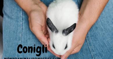I conigli domestici, di cosa hanno bisogno