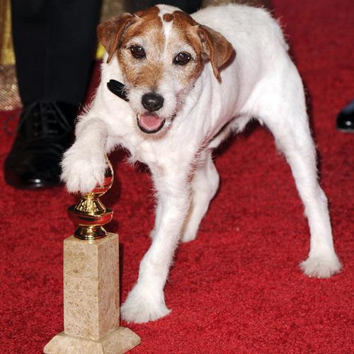 cane attore