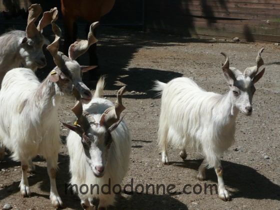 Mini Italia animali fattoria