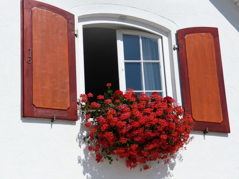 Geranio sul balcone, le esigenze
