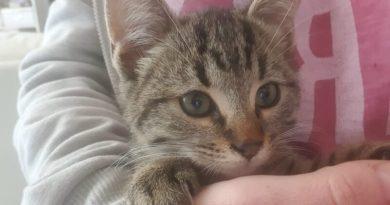 Curiosità sui gatti, i felini più amati al mondo