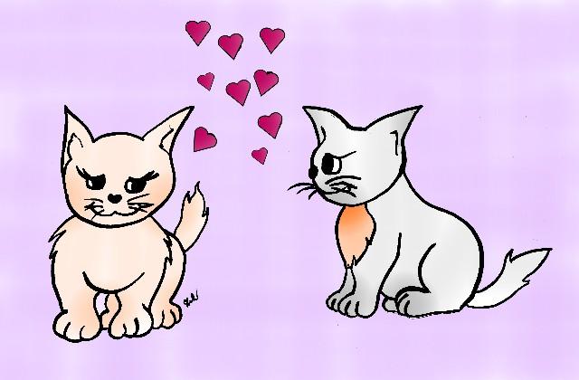disegna gatti