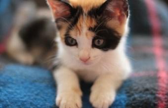 Micio, che bello sarebbe avere un gattino