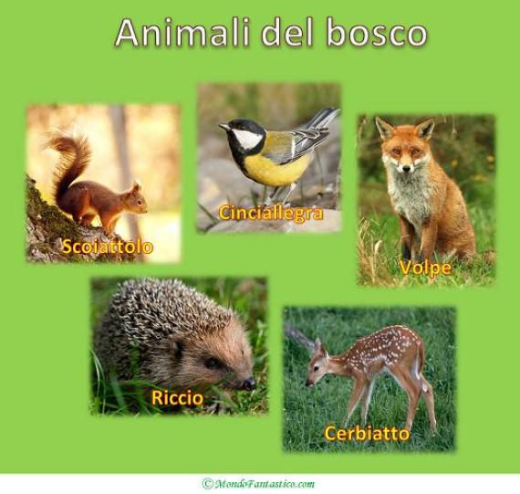 Favole Per Bambini Animali Del Bosco Mondofantastico Com