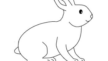 Disegni Per Bambini Coniglio Da Colorare Disegni Da Colorare