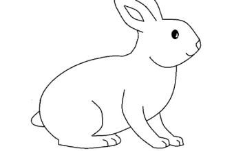 Disegni da colorare animali, il coniglio