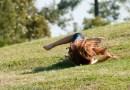 Giochi all'aria aperta: rotolare da una collina