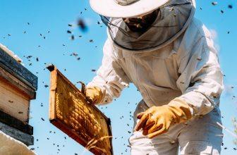 Make Money Beekeeping