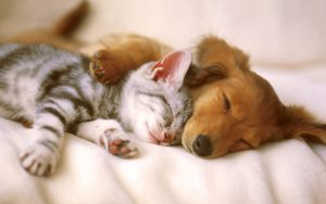 moneymagpie_Make money from pet sitting and pet boarding_kitten-puppy-cuddle