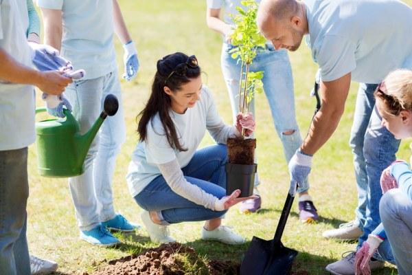 Volunteers plating trees