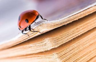 Ladybird beetle on a paperback book