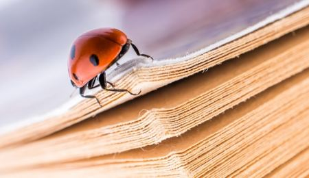 Ladybird beetle on a paperback book