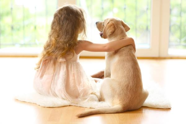 Little girl with arm round golden Labrador puppy