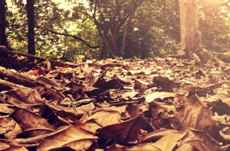25 ways to make and save money in Autumn