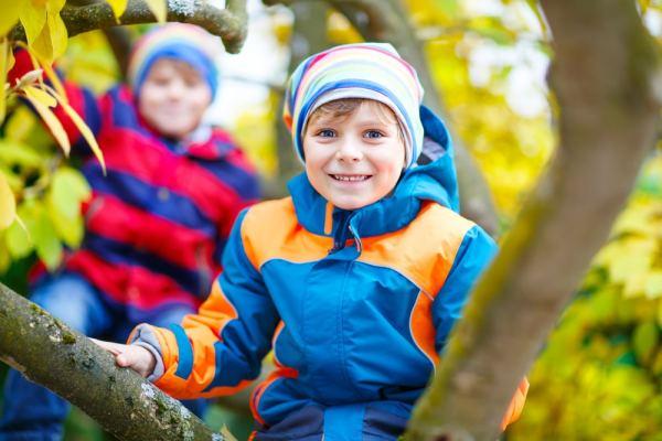 Little boys climbing a tree in the autumn