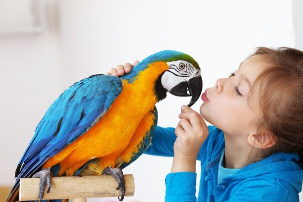 Little girl with pet blue and yellow macaw parrot