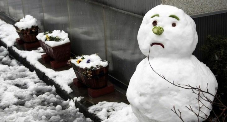 winter garden diy