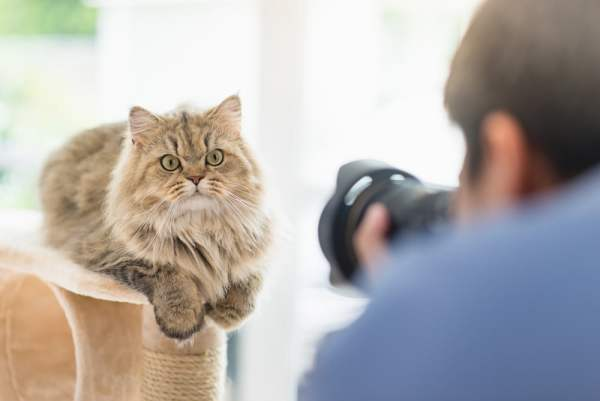 Photographer photographing cat