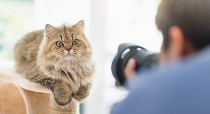 Sell photos of your cat or dog to stock sites for cash
