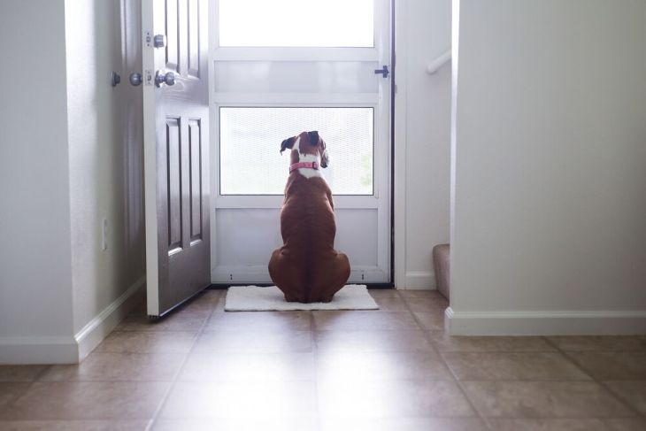 Doggyguard