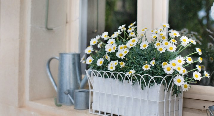 windowbox ideas