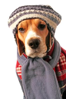 Resultado de imagem para dog winter