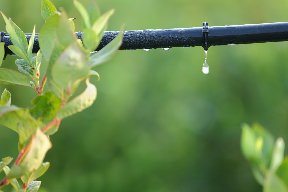 xeriscape, drip irrigation
