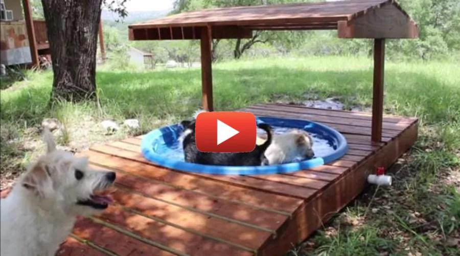 DIY Dog Wading Pool