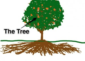 Traditional IRA is like the tree
