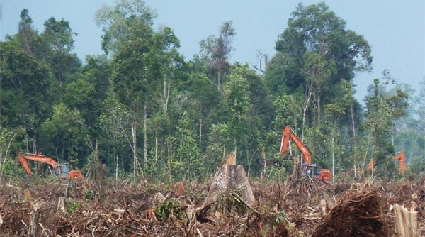 "Tiga buah ekskavator tertangkap basah pada foto ini sedang melakukan penebangan pepohonan hutan alam di konsesi PT. RIA. Foto diambil oleh Eyes on the Forest pada lokasi 10 di Peta 1 (0o4'38.93""N, 102o57'4.18""E) tanggal 8 April 2013. Foto: Eyes on the Forest"
