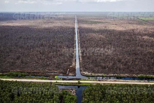 Hutan  gambut yang terbakar di konsesi  PT PT Sumatra Riang Lestari di Riau. APRIL sejak Januari 2014 berkomitmen tak akan menebang di hutan bernilai konservasi tinggi.  © Ulet Ifansasti / Greenpeace